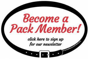 become a pack member - join our newsletter!